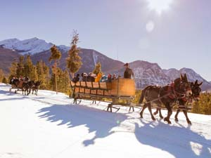 Mule drawn sleigh ride- winter at the Frisco Adventure Park